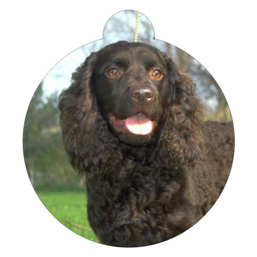 American Water Spaniel Picture ID tag